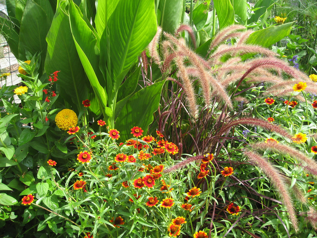 A bed of mixed annuals including tender perennials, summer bulbs, seed grown flowers and colorful grasses.