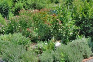 Photo 2Herb Gardens like this one at Mercer Educational Gardens are magnets for beneficial insects offering food, shelter and a place to raise young. (Photo by ____)