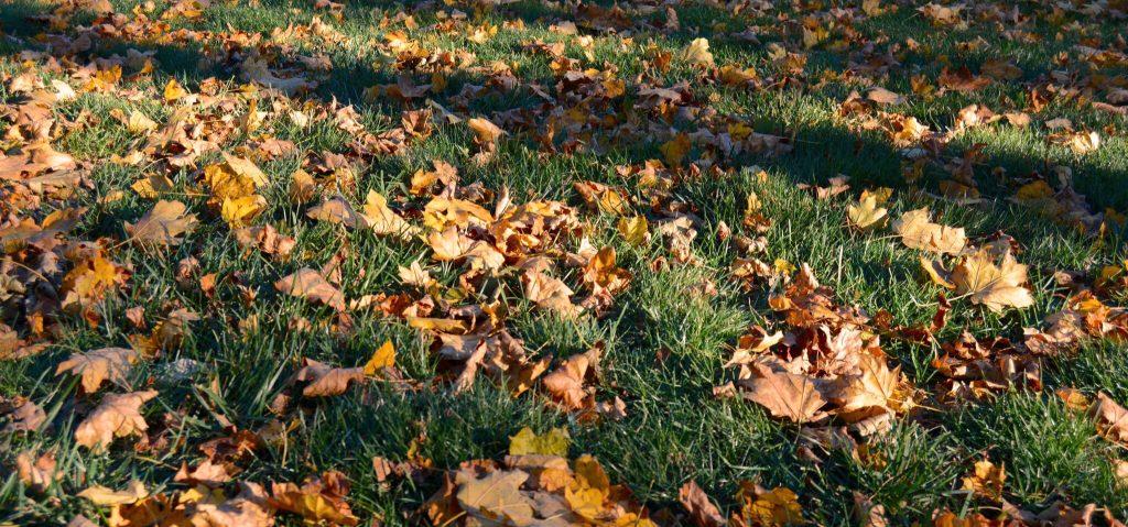 fall-leavechorgan