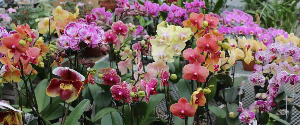 2016-03-13-orchidtour_003_0_park_img_3413