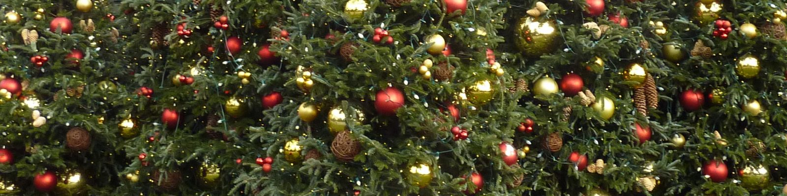 cropped-2012-11-28_NYBOTAN-HRBRM_071-0_JAS_P1090430.jpg