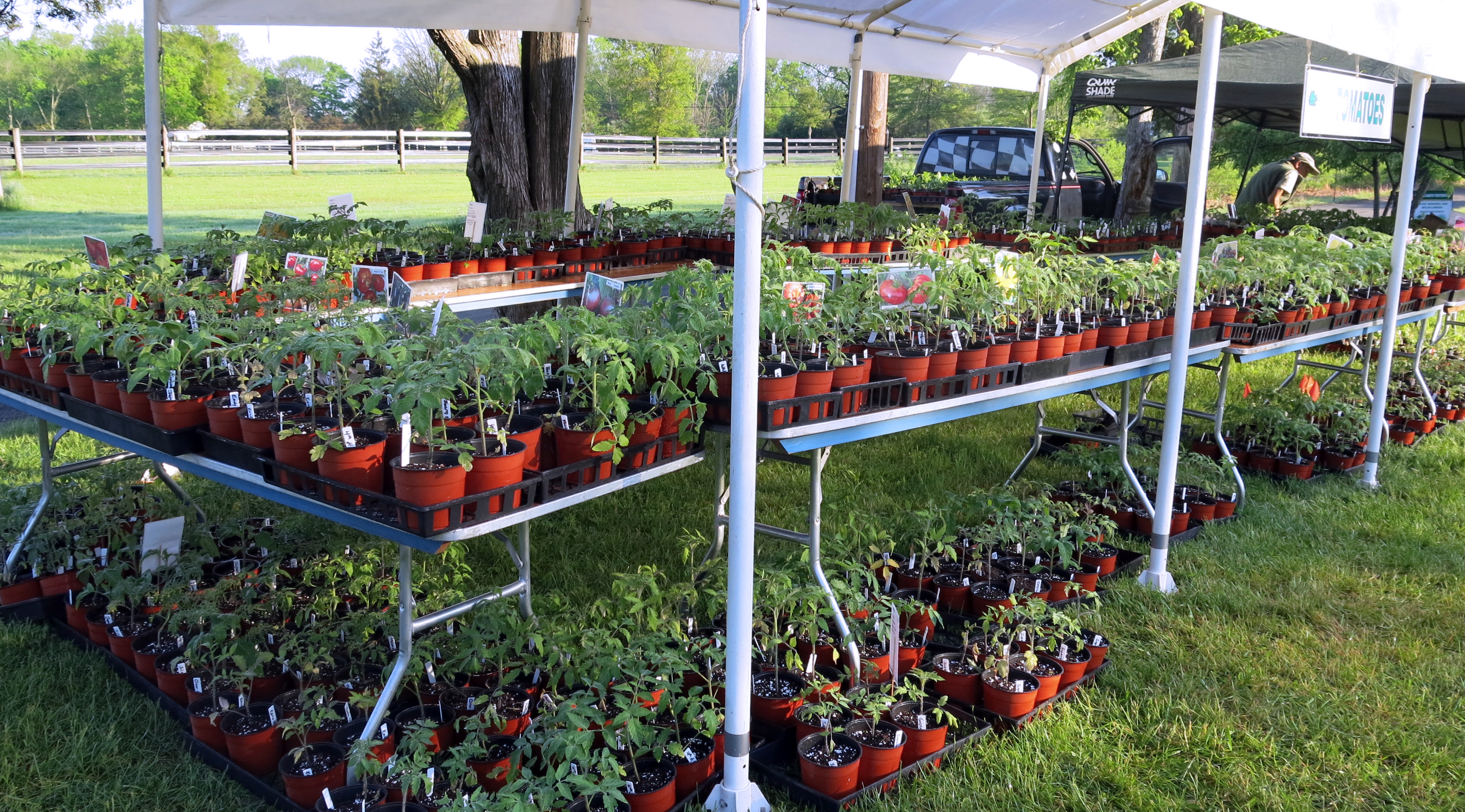 Homegrown Tomatoes And Peppers Will Be In Abundance, Including The Popular  Rutgers Tomato Varieties, Rutgers, Ramapo, Moreton, Rutgers 250,