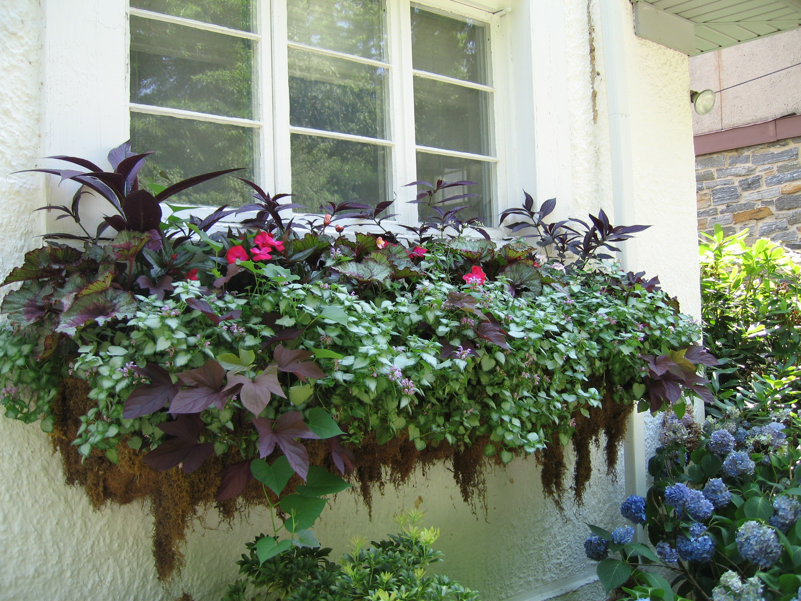 annuals – Rutgers Master Gardeners of Mercer County