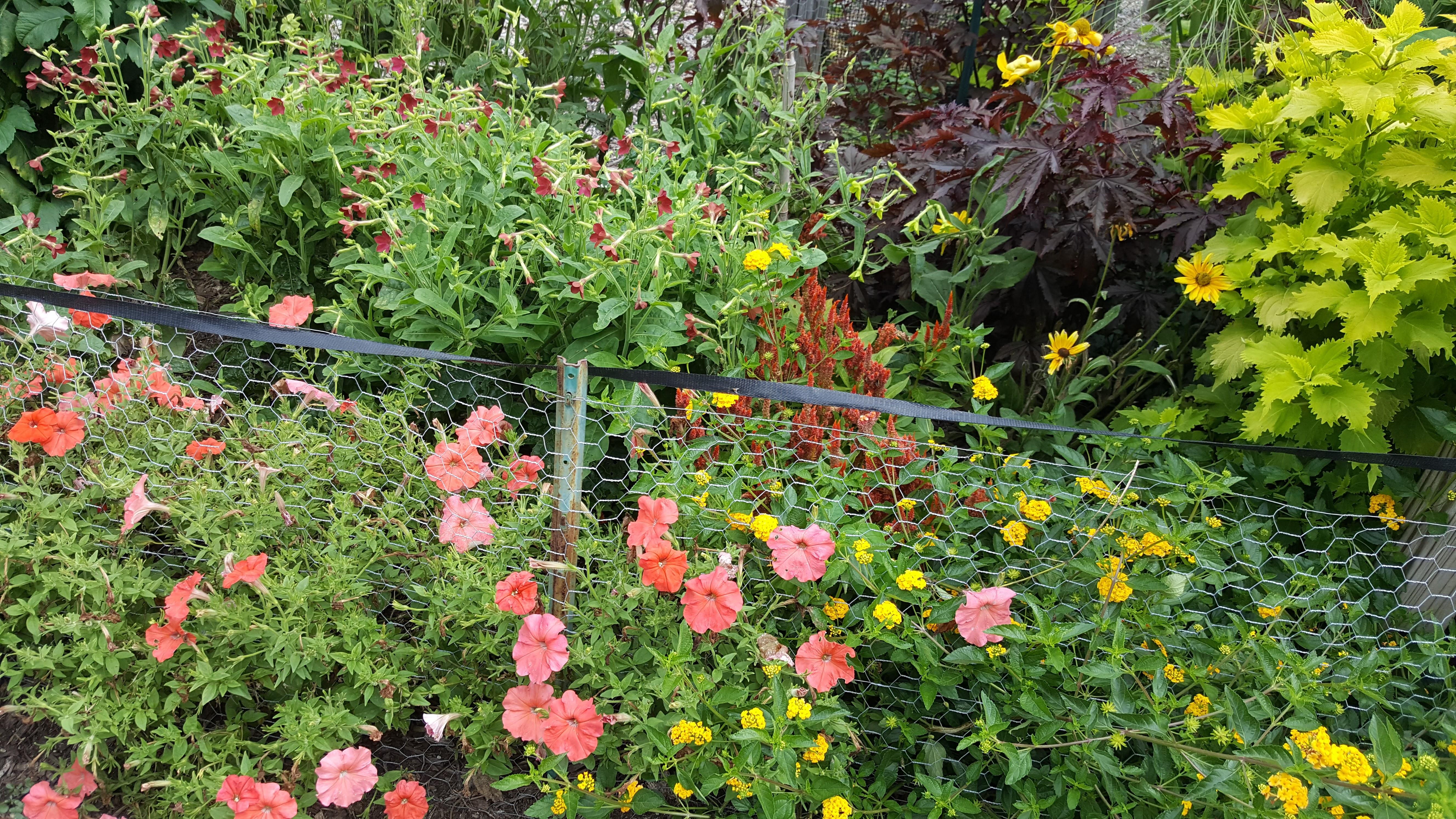 Annual Garden 2017 Aug