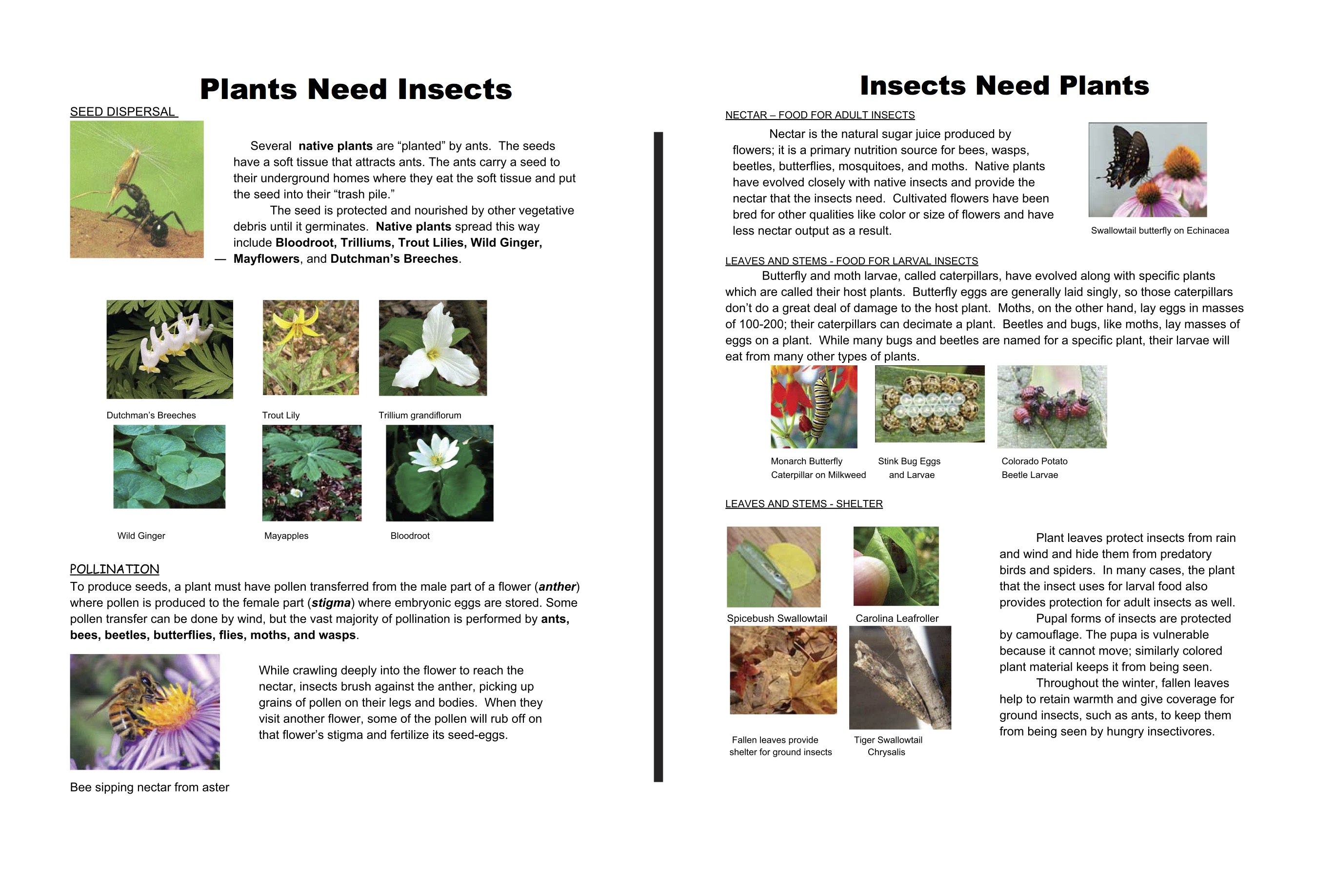 Plants Need Insects